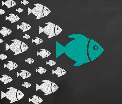 Coaching: Become a big fish.