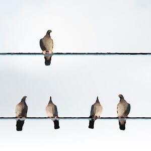 Elevating Your View: Birds on wires