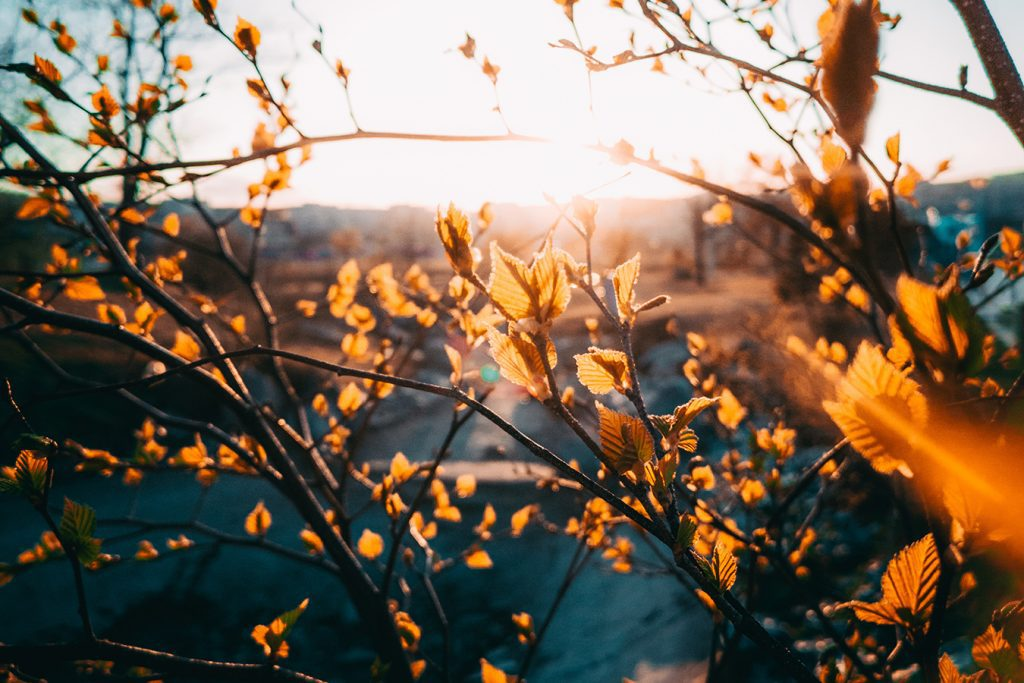 sunlight filtering through the orange leaves on a branch in the autumn landscape